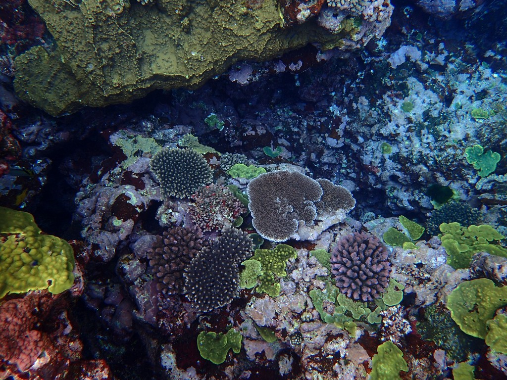 A rich variety of colourful corals